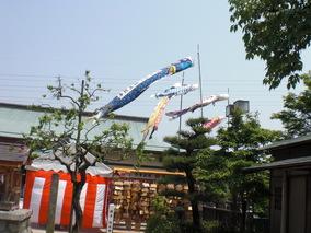 CIMG3441.JPG鯉のぼり