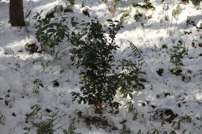 snow_setu.jpg